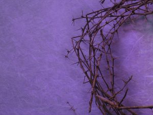 purple thorns